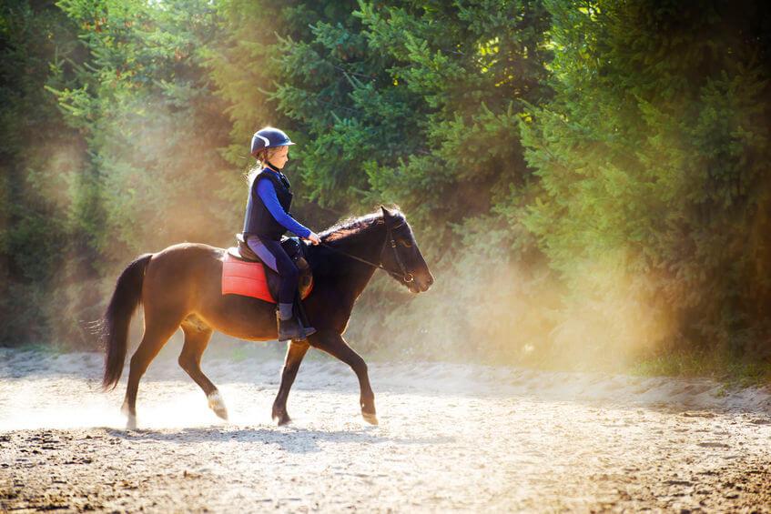 乗馬という習い事