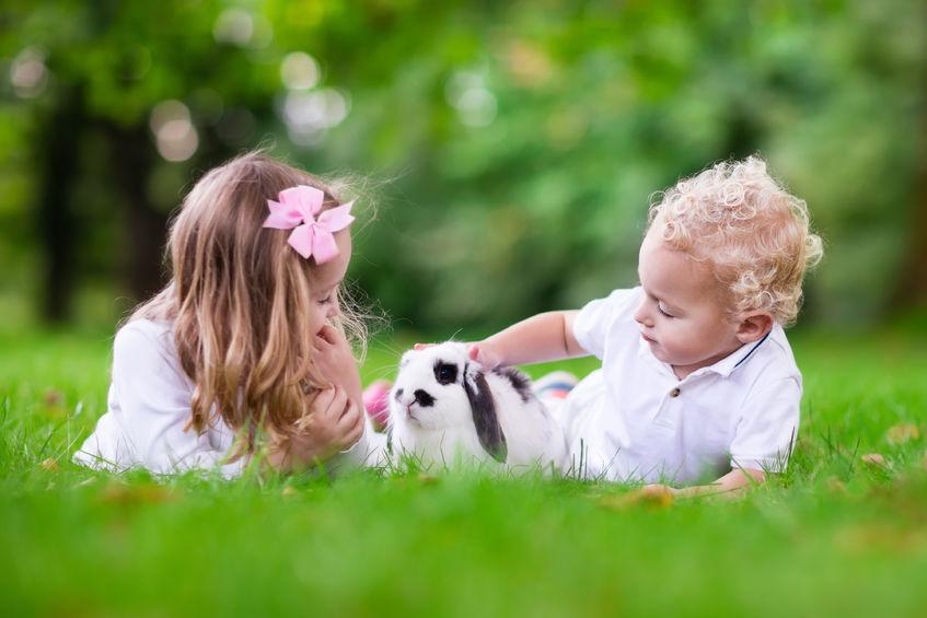 家庭で出来る情操教育