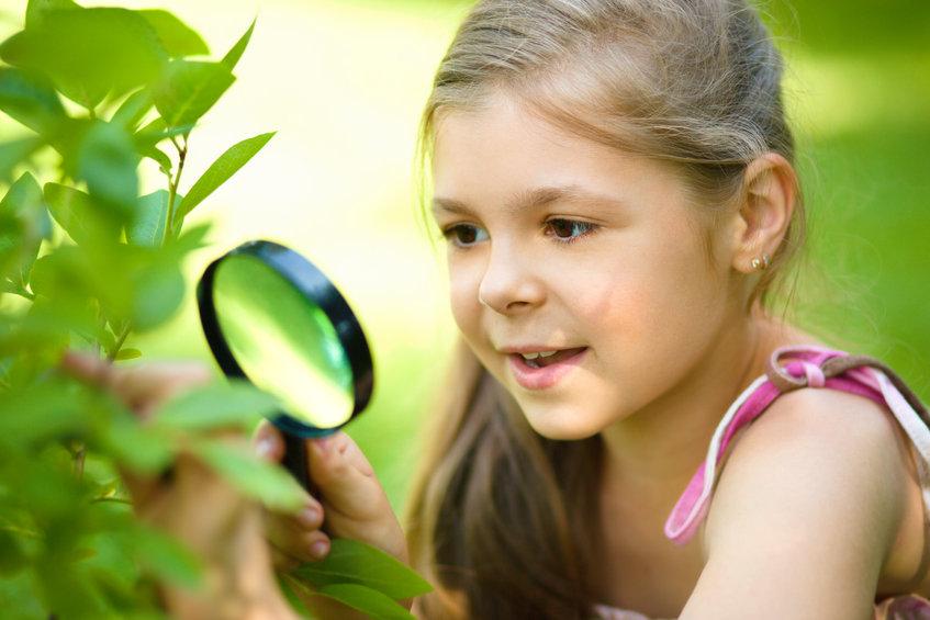 葉の観察をする子供